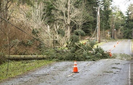 Fallen tree with powerlines on road way