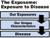 diagram showing interaction of the genome and exposome in disease
