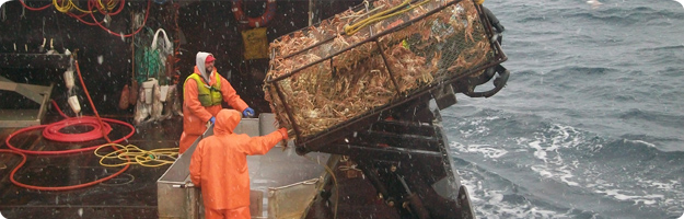 A photo of two Bering Sea crab fisherman landing a full pot of Opilio crab.