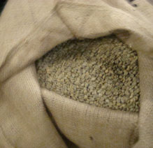 Green coffee beans in a burlap bag