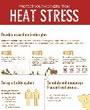 Heat Stress Infographic Thumbnail Preview