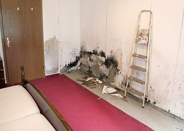 Cdc Indoor Environmental Quality Dampness And Mold In