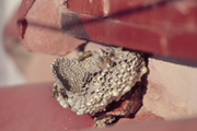 escorpião deixando de shell