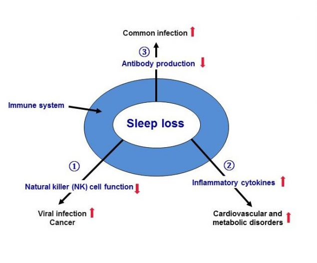 Figure 2.2. Sleep loss can negatively affect different parts of the immune system.