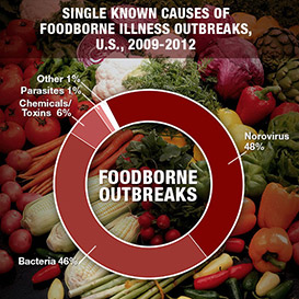 Norovirus accounted for 48% of single known causes of foodborne illness outbreaks in the U.S. from 2009 through 2012. Bacteria accounted for 46%, chemical and toxins 6% and parasites and other accounted for 1% each.