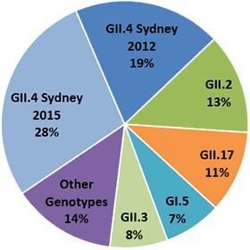 Pie chart indicates genotype distribution of norovirus outbreaks (number = 180) from September 1, 2015 to January 15, 2016: 15% were GI.5; 18% GII.2; 15% GII.17; 15% GII.4 Sydney; and 37% were other genotypes.