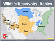 Wildlife Reservoirs: Rabies