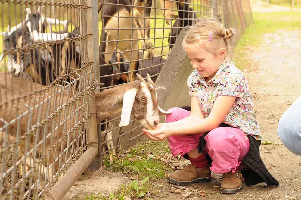 A girl petting a zoo goat
