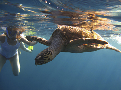 Woman diving in the water looking at a sea turtle