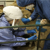 Person wearing protective equipment examining a sheep