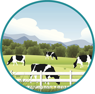 Vector image of cows grazing.