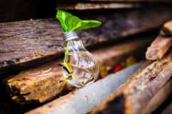 Image depicts leaves growing out of a lightbulb. Free photo.