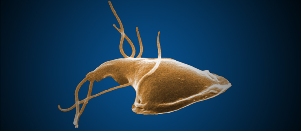 Can A Human Give A Dog Giardia