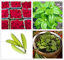 Images of Rasberries, basil, snow peas and mesclun lettuce.