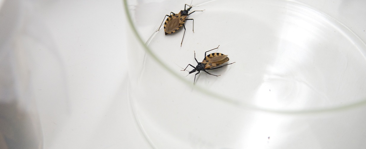 World Chagas Disease Day – April 14, 2020