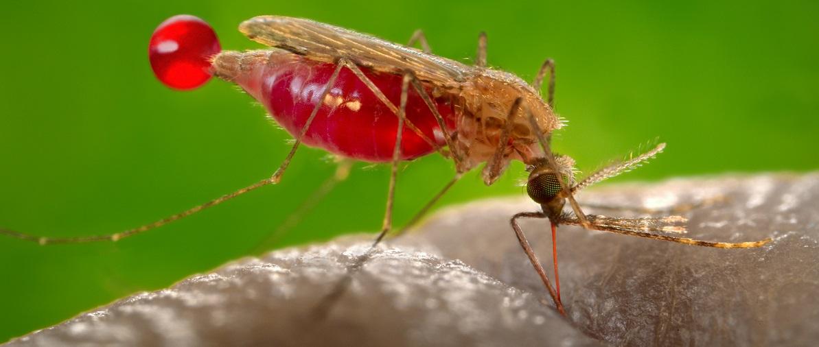 Malaria drug beats resistant parasite