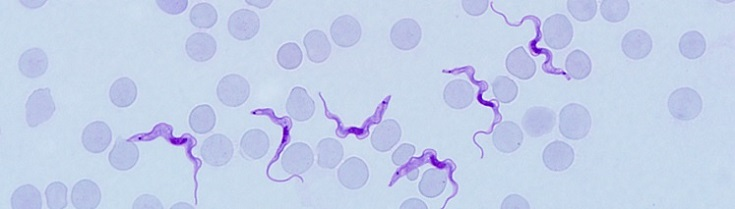 CDC - African Trypanosomiasis