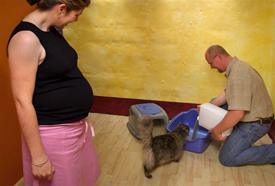 Ne dobjuk ki a cicát: kis odafigyeléssel elkerülhető a toxoplazmózis