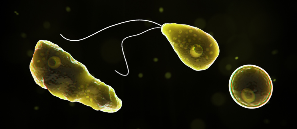 Naegleria fowleri banner - trophs under a microscope with contrast