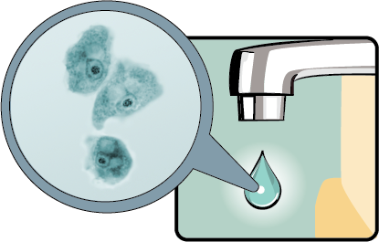 illustration of a faucet with a drop of water magnified showing the amebas in the water