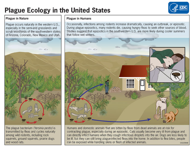Plague ecology in the U.S. infographic.