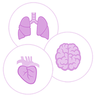 Illustration of lungs, heart, and brain