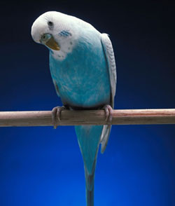 Bird on a perch