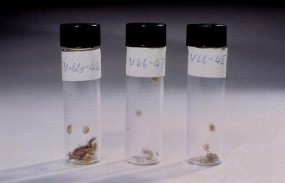 3 vials containing smallpox scabs