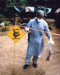 Investigating outbreak of monkeypox in Democratic Republic of the Congo formerly Zaire, 1996–1997. Dr. Williams, D.V.M. wearing personal protection equipment (PPE) handling two newly-acquired Gambian rats.