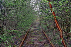 Photo of abandoned railroad tracks overgrown with shrubs