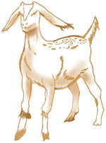 Illustration of a goat