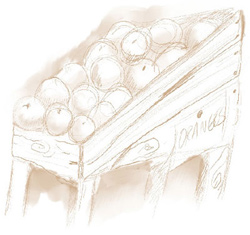 Illustration of a fruit stand with oranges