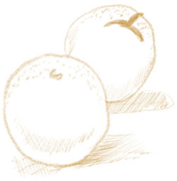 Illustration of oranges