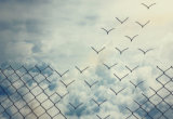 Illustration of links in a chain link fence separating from the fence resembling birds and flying away