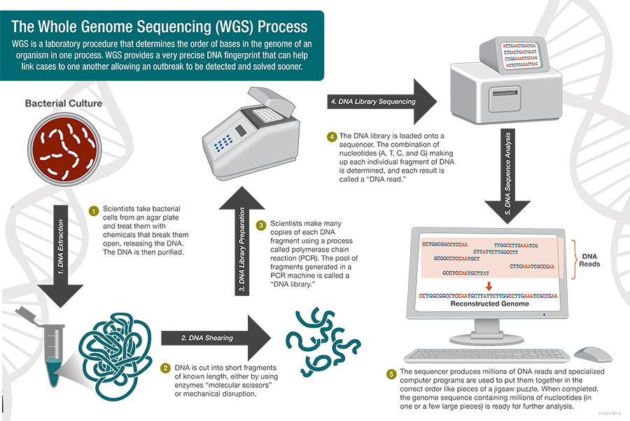 Whole Genome Sequencing Process - WGS is a laboratory procedure that determines the order of bases in the genome of an organism in one process. WGS provides a very precise DNS fingerprint that can help link cases to one another allowing an outbreak to be detected and solved sooner.