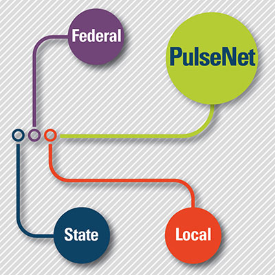 Graph showing connection between federal, state, local partners and PulseNet labs