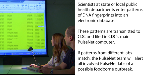 Scientists at state or local public health departments enter patterns of the DNA fingerprints into an electronic database. These patterns are transmitted to CDC, where they are filed in the main PulseNet computer. If patterns from different labs match, the PulseNet team will alert all involved PulseNet Labs of a possible foodborne outbreak