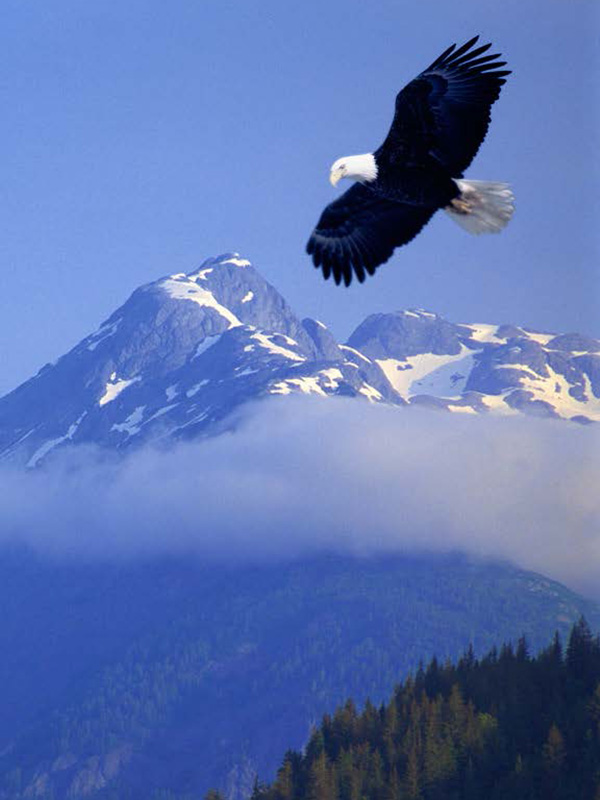 Eagle soaring with mountains and forests in the distance