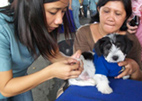 woman vaccinating a puppy against rabies