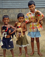 Three boys holding puppies