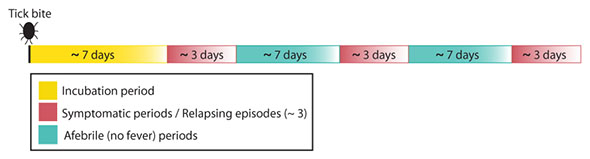 TB-RF timeline (CDC)