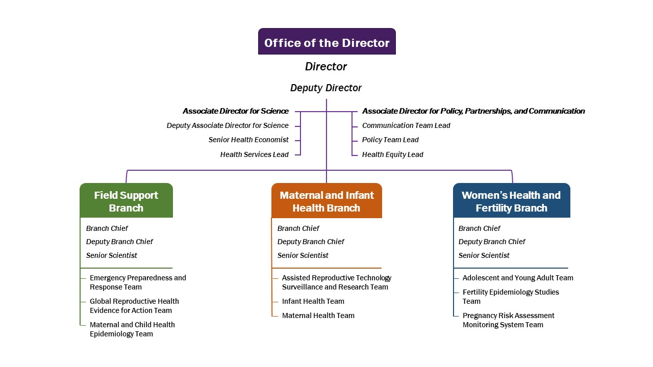 DRH Organizational Chart: Office of the director: Associate director for science, deputy associate director for science, director, deputy director, communication team lead, policy lead, health equity lead. Field Support Branch: branch chief, deputy branch chief, senior scientist, emergency preparedness team, global reproductive health evidence for action team, maternal and child health epidemiology team. Maternal and Infant Health Branch: Branch chief, deputy branch chief, senior scientist, assisted reproductive technology surveillance and research team, infant health team, maternal health team. Women's Health and Fertility Branch: Branch chief, deputy branch chief senior scientist, adolescent and young adult team, fertility epidemiology studies team, pregnancy risk assessment monitoring system team.
