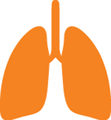 a vector image of a set of lungs