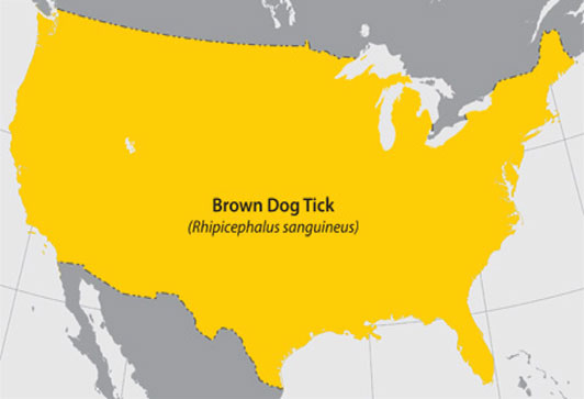Map of the United States highlighting in yellow where the Brown Dog Tick can be found.  The entire map is highlighted in yellow.
