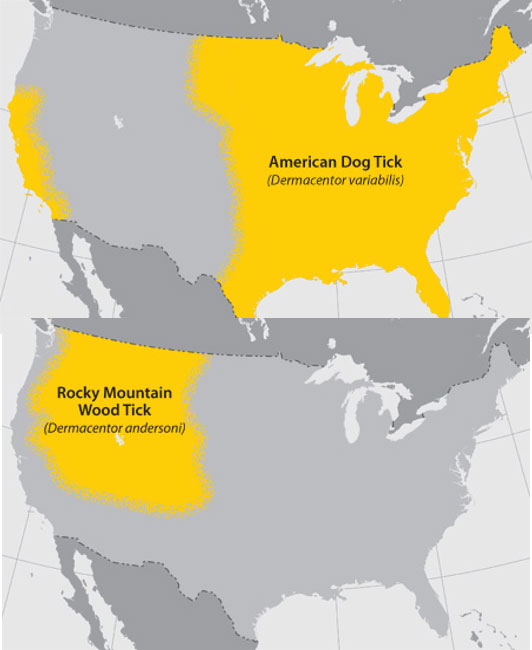2 maps of the United States. The top map shows where in the U.S. is the American Dog Tick located. The entire eastern half of the country as well as California are highlighted. The bottom map shows where the Rocky Mountain Wood Tick can be found. The North West part of the U.S. is highlighted.