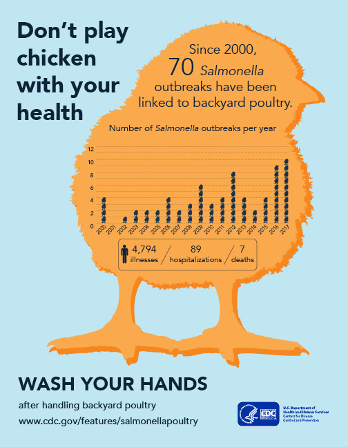 Illustration showing a chicken with text reading Don't play chicken with your health. Wash your hands after handling backyard poultry.