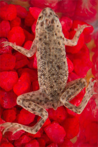 Reptiles and amphibians-like turtles, lizards, and frogs-can carry <em>Salmonella</em>