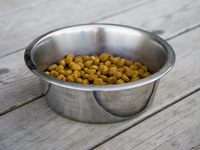 Photo: dry dog food in bowl