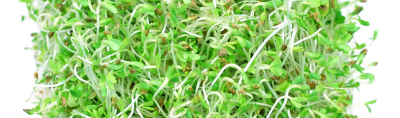 Multistate Outbreak of Salmonella Reading and Salmonella Abony Infections Linked to Alfalfa Sprouts