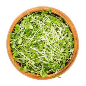 Photo of clover sprouts